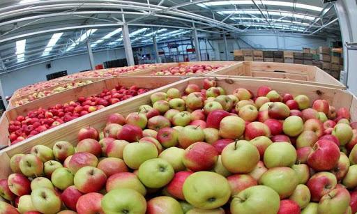 Чортківська «яблучна ферма» виявилася фейковою