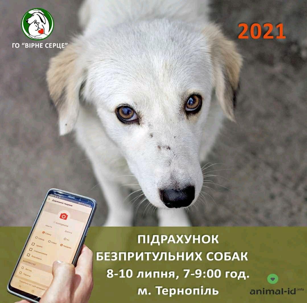 Навіщо в Тернополі знову рахували безпритульних собак